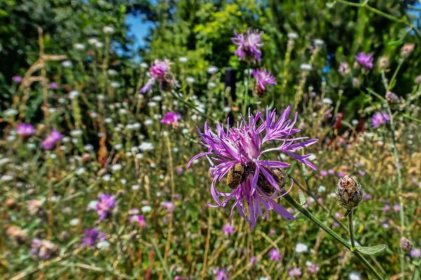 2018 Wildflowers