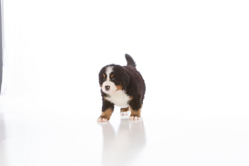 2013-Pearson Pups-Jun02-0276.jpg