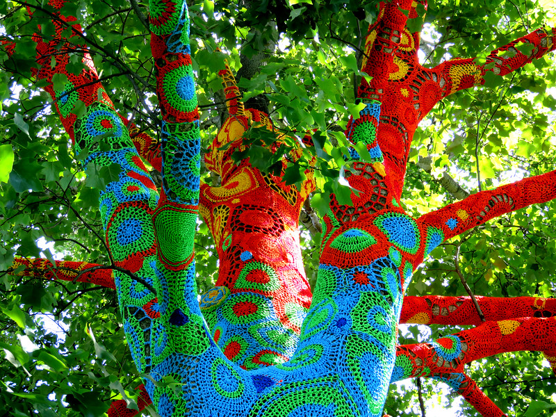 Beautiful yarnbombed tree in stony brook