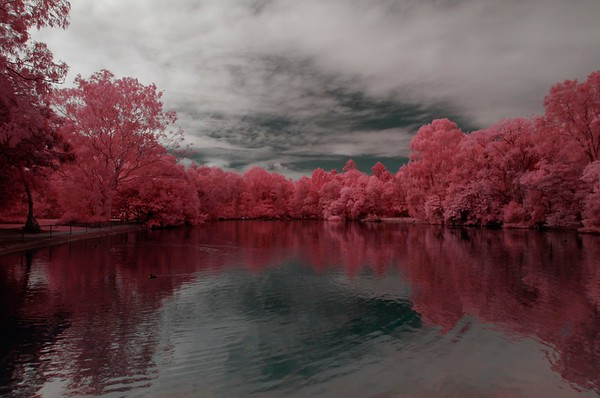 Infrared Pics 2019