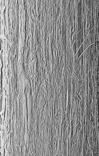 T - Cedar Bark.jpg