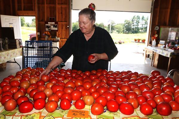 Saja Farm tomatoes 090321