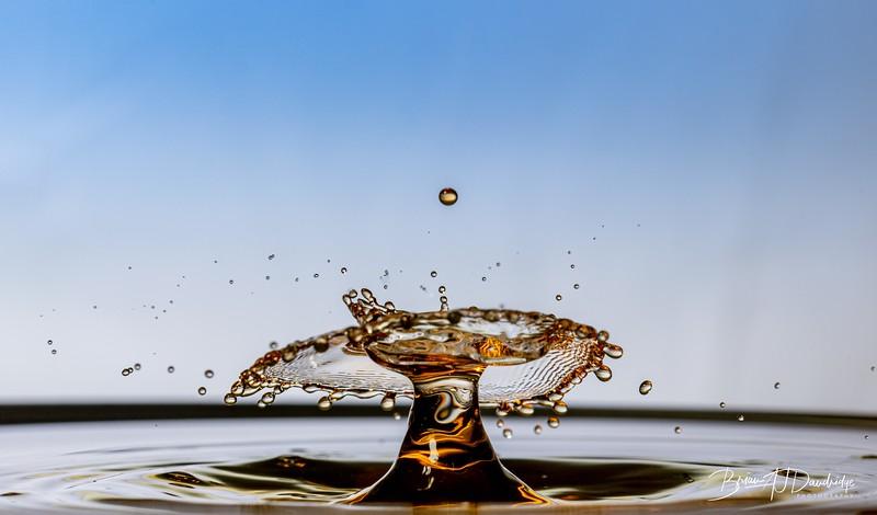 Splash-Art-Orange-1516.jpg