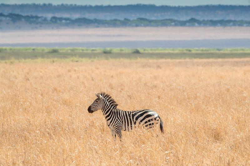 Africa - 102116 - 8214-Edit.jpg