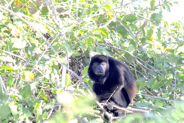 Jackie/Bern/Jo monkey adventures