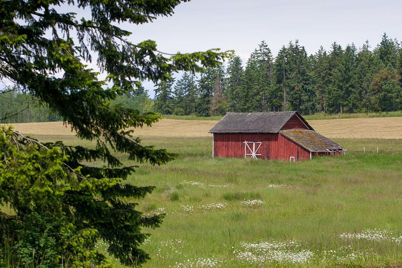 sequim barn-8591.jpg