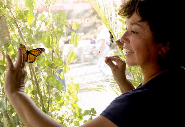 Mary Lou snags a Monarch