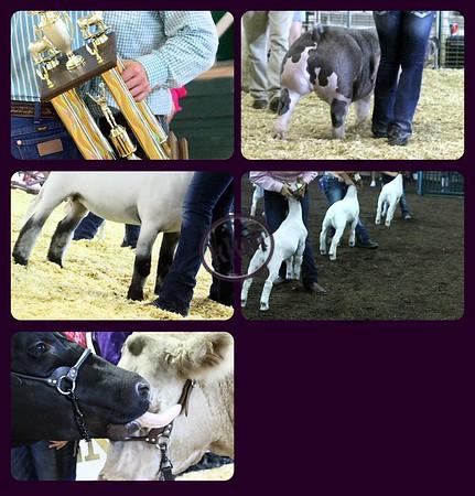 2015 County Fairs