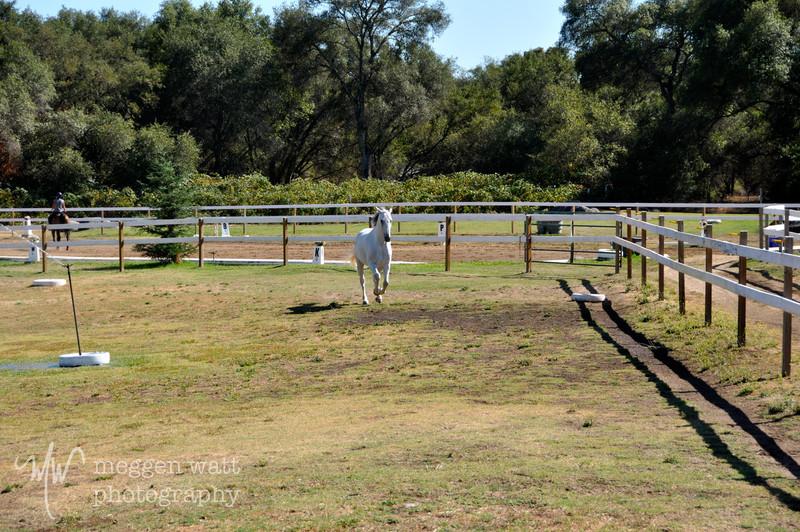 EB&Horses-083.jpg