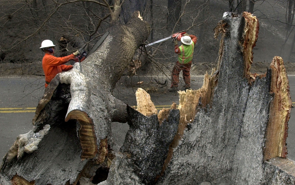 . Caltrans workers chop up a charred tree that was damaged in the Cedar fire near Cuyamaca, Calif. Friday, Oct 31, 2003. Cool damp weather is aiding firefighters in controlling the 272,000 acre Cedar fire east of San Diego. (AP Photo/Charlie Riedel)
