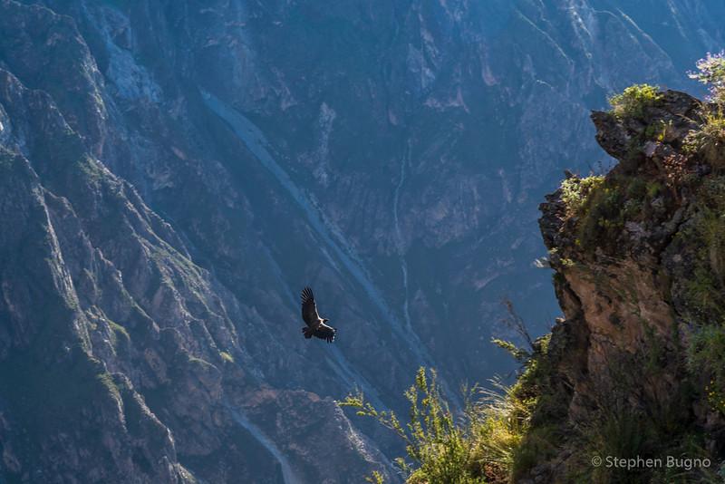 Colca Canyon-1187.jpg