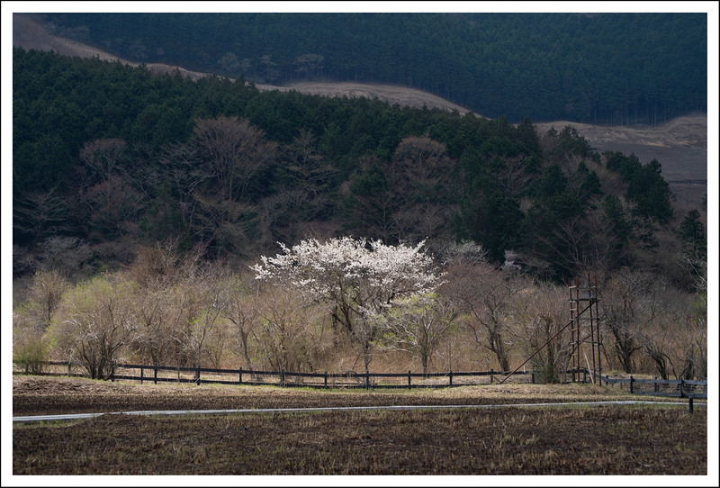 Shiseikaen-4416.jpg