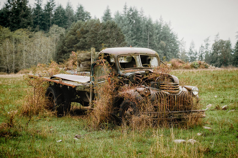 Out to Pasture III