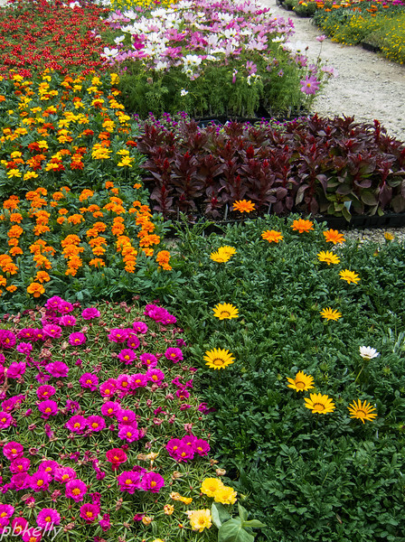 May 22.  Went to the Nursery for some annuals.  I liked the juxtaposition of the color blocks.