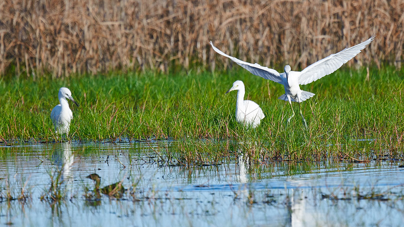 20181103 - Brazoria Wildlife Refuge-85B_3881.jpg