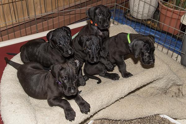 Paul's Puppies