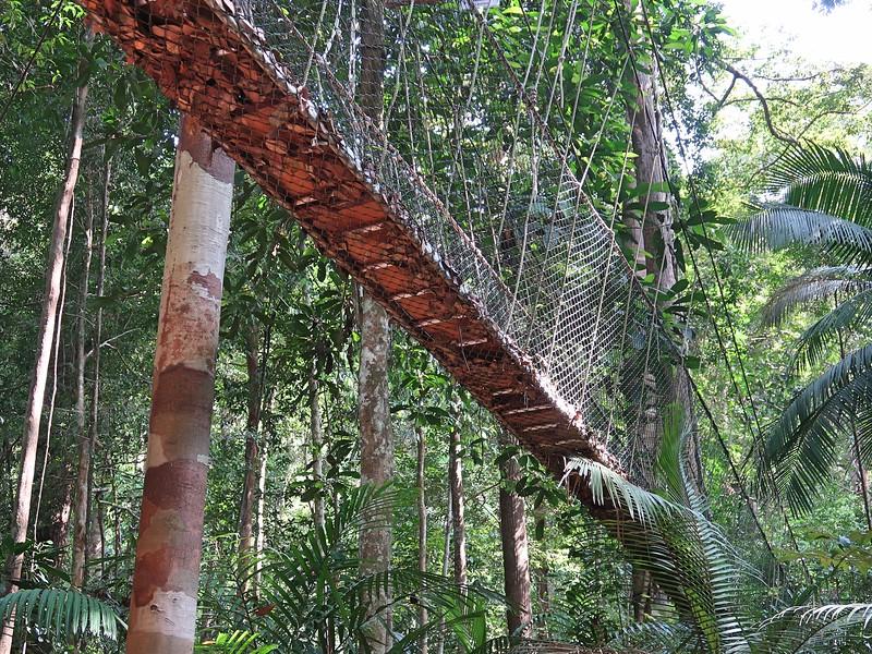 IMG_5276-canopy-walk.jpg