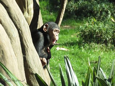 NC Zoo 012013