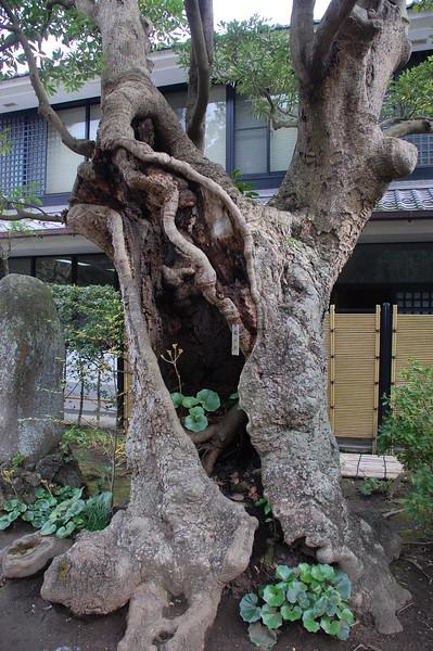 25-Japan09_2217.JPG