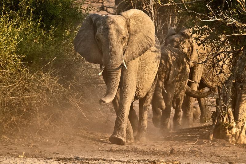 Africa (3) - David Speltdoorn.jpg