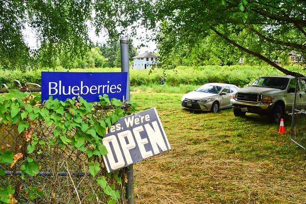 Kenneydale Blueberry Farm