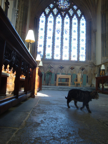 The regal church cat appears to secretly run everything.