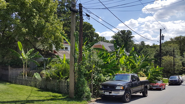 Bo's Jungle August 23, 2016