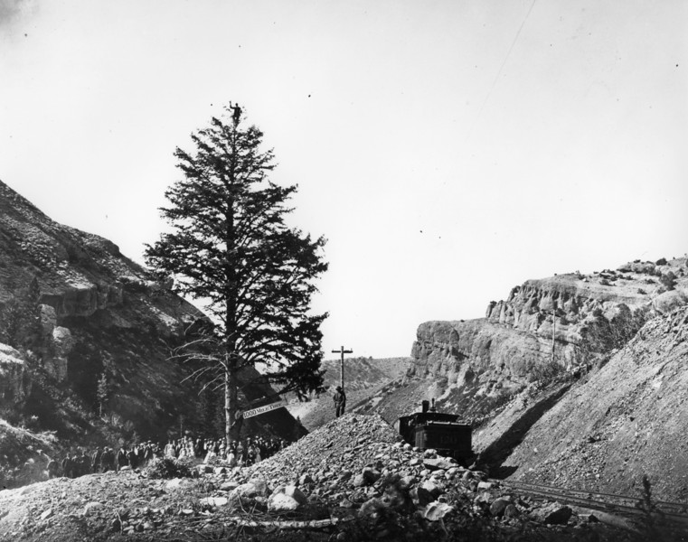 Thousand Mile Tree, Weber Canyon. (Union Pacific Historical Collection)