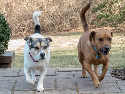 2019-01-26 Shorty and Scout