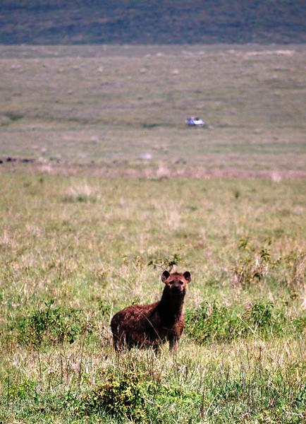 Ngorongoro (165).JPG