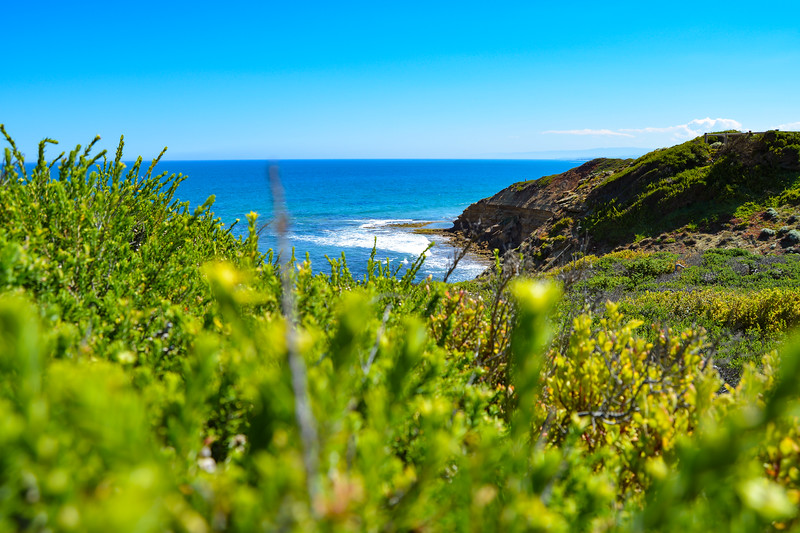 Point Addis - NOV2017 - bay through the bushes.jpg