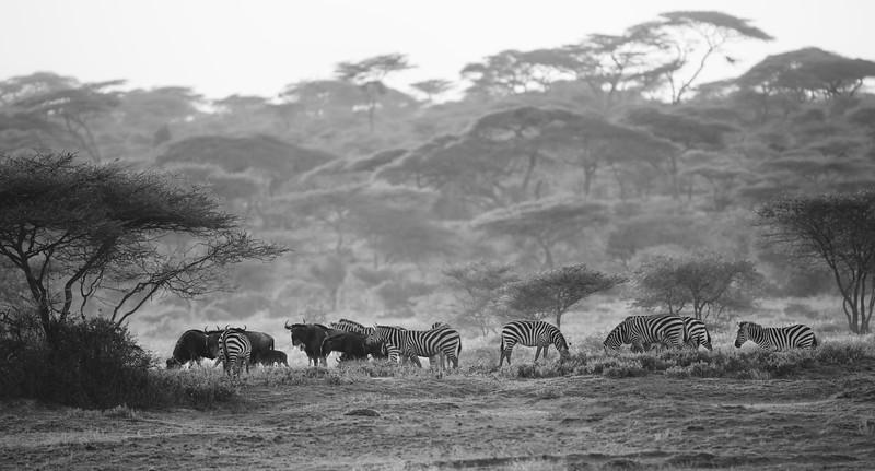 Tanzania_Feb_2018-93.jpg