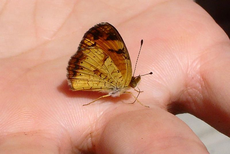 Butterfly of the week!  (Photo by Kirk)
