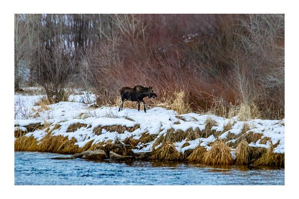 Provo River Winter Slideshow