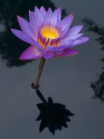 Flower Images: 2010 - 2013
