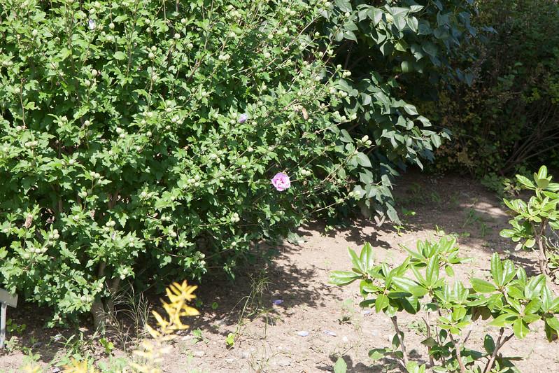 2009 09 06_White Flower Farm_0132.jpg