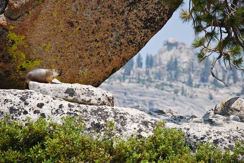 Yosemite_06_(DSC_0023).jpg