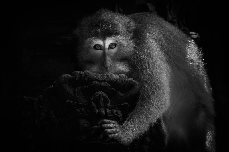 170507 0775 - Indonesia - Bali - Ubud.jpg