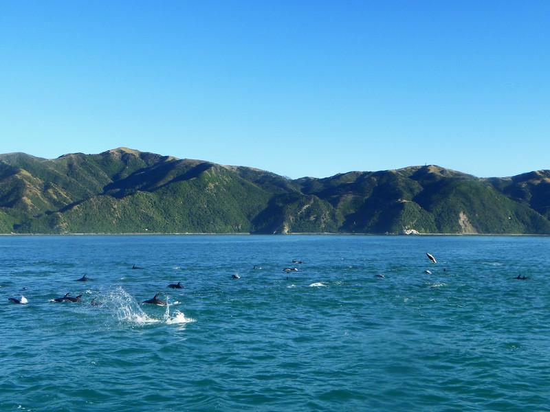 DolphinSwim_4_blog.jpg