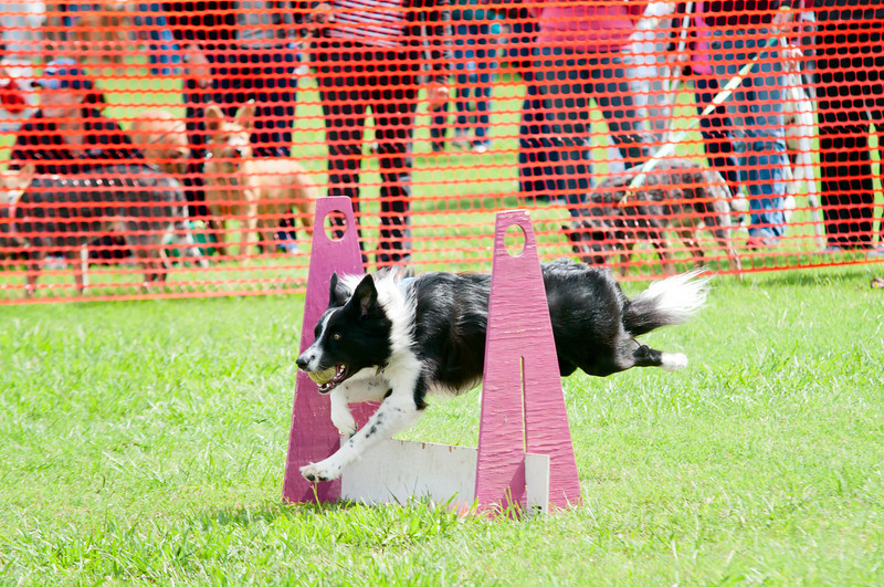 2011 Bark in the Park-179.jpg