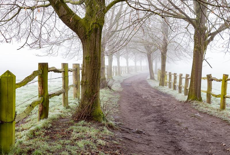 Dunham Park Fog