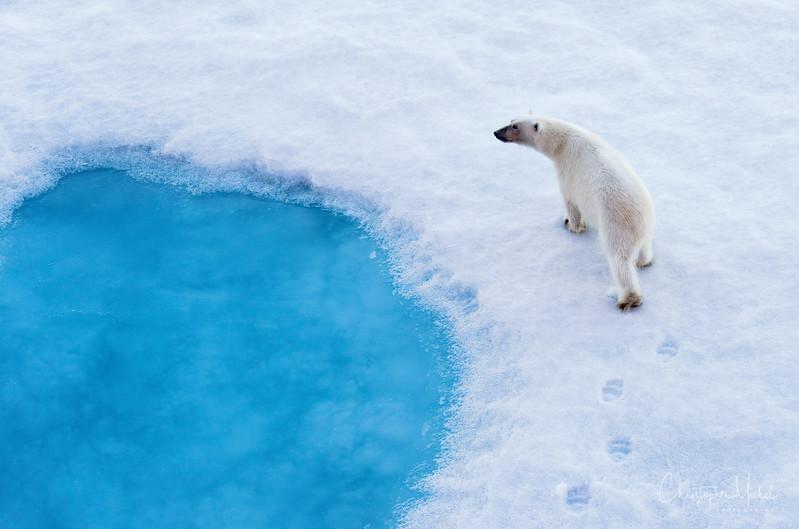Bear Pool.jpg