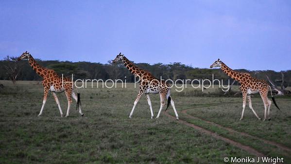 Kenya 2014 - Harmoni Photography