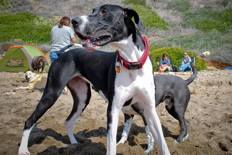 dogs_beach-097.jpg