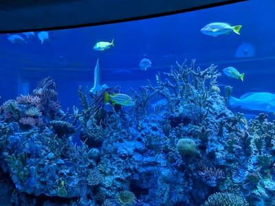 Wonders of Wildlife Museum