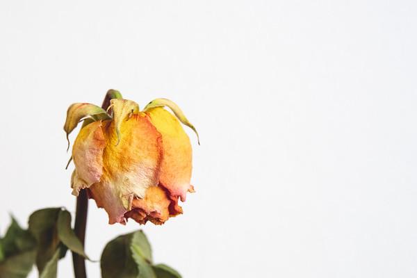 2020-02-29 Růže