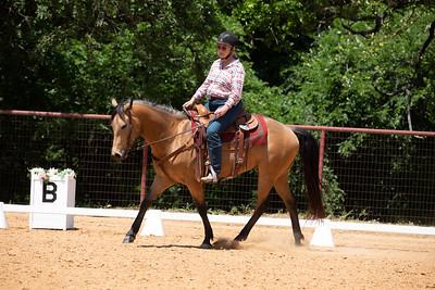 Horse 238