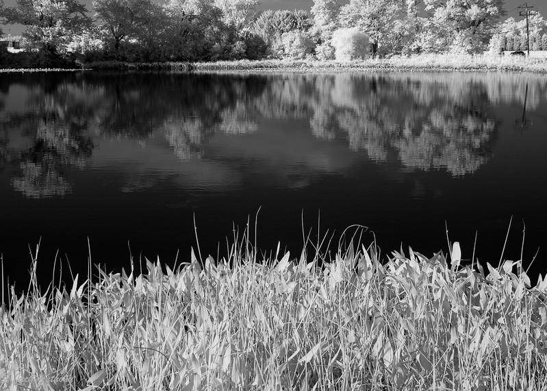 Pond in Lewes Delaware