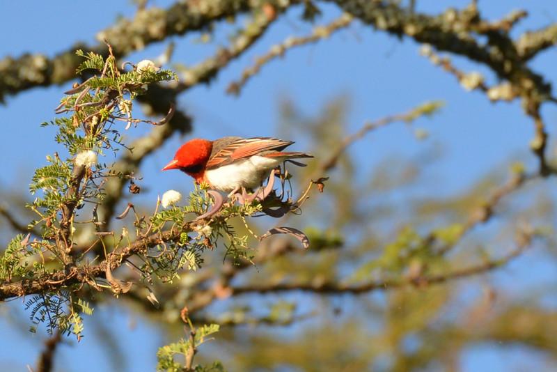 East Africa Safari 42.jpg