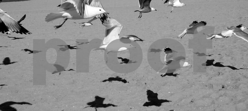 venice gulls 3.jpg